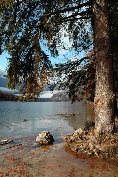 Lake Bohinj - pure nature in the Triglav National Park