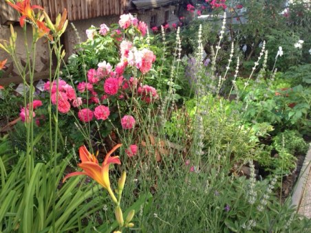 pr'Skminc garden impression