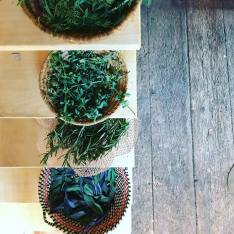 Herbs from the pr'Skminc garden
