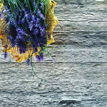 lavender from the pr'Skminc garden