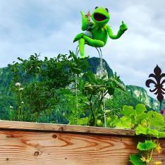kermit loves our place
