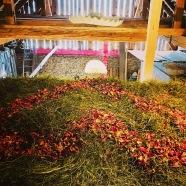 haybox view over hayloft gallery